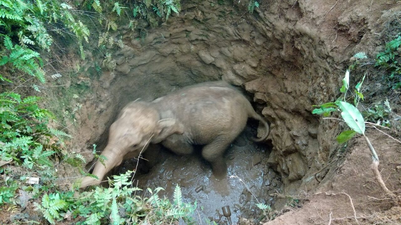 dramatic-footage-shows-baby-elephant-stuck-in-an-abandoned-well