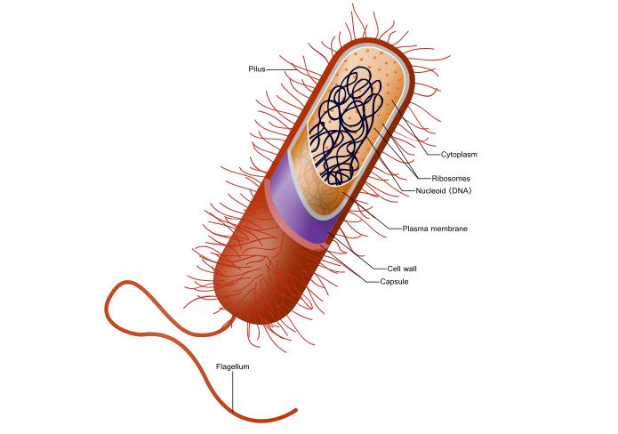 Microfossil prokaryote