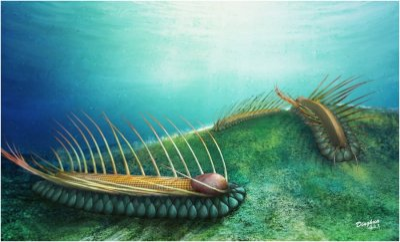 Ancient sea creature