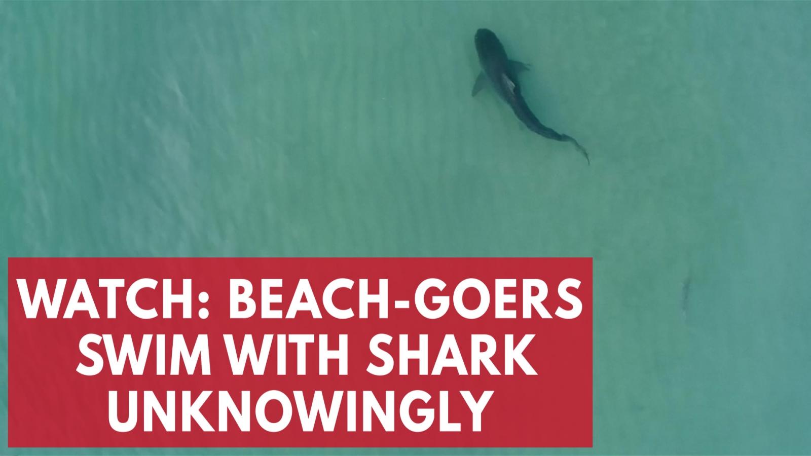 watch-beach-goers-swim-with-shark-unknowingly