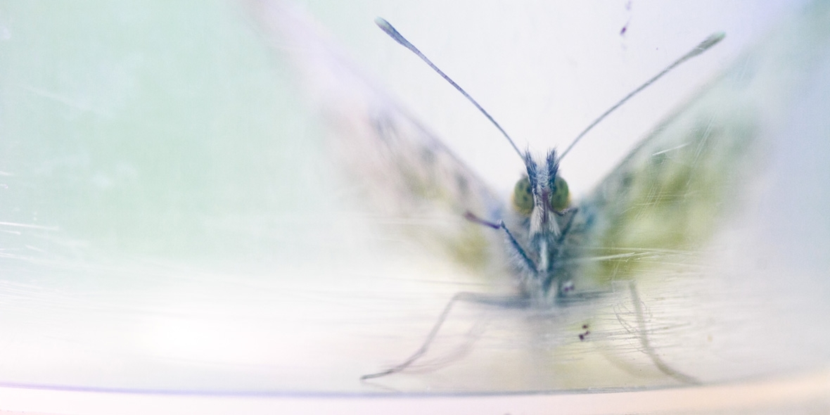 British Ecological Society photography competition