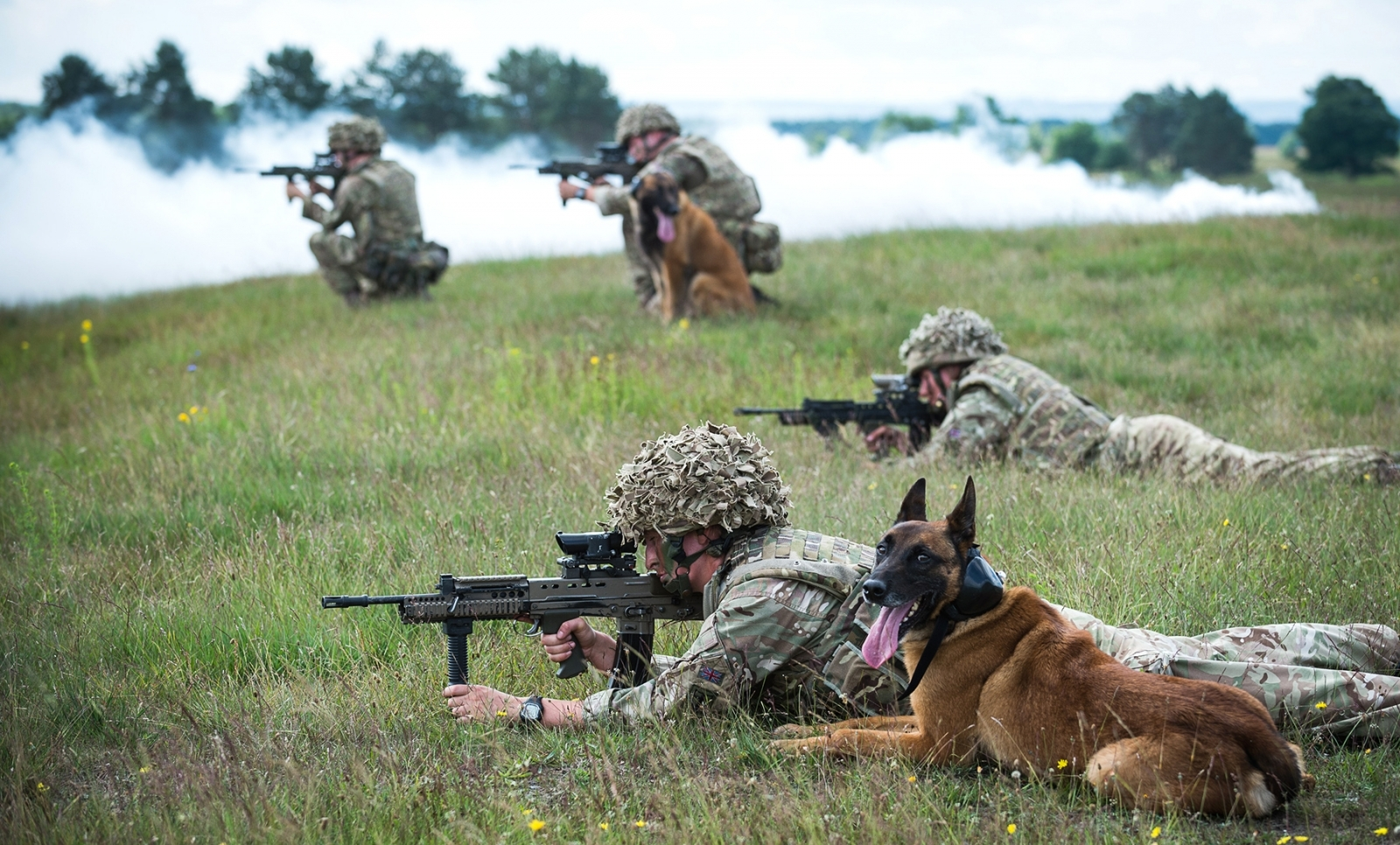 Dogs and soldiers on training exercise