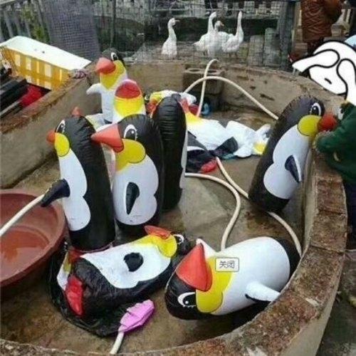 China zoo