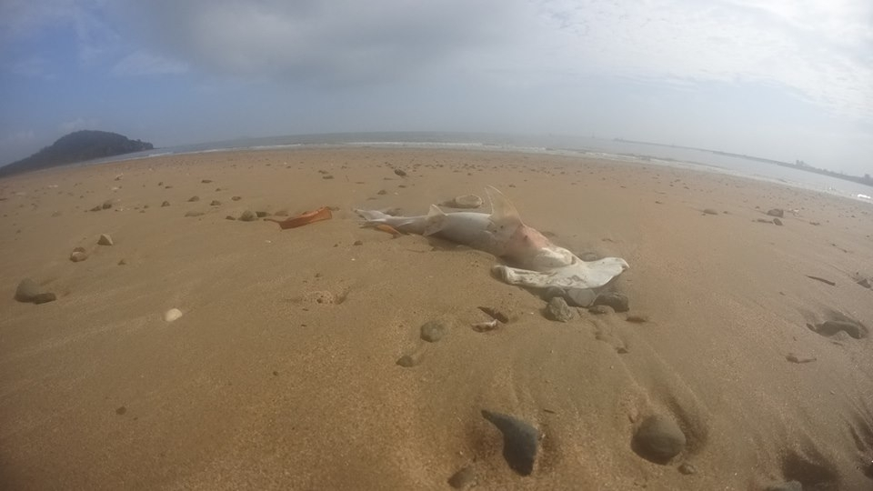 Mystery surrounds the reasons behind dozens of dead sharks being washed up onto a Queensland beach