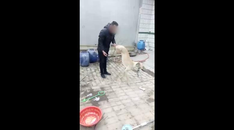 Man beats dog to death