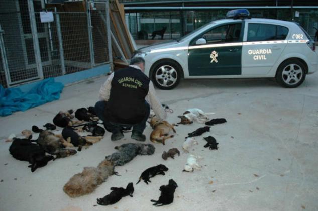 Animal Park mass killings