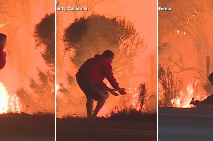 Los Angeles Wildfire Rabbit Rescue