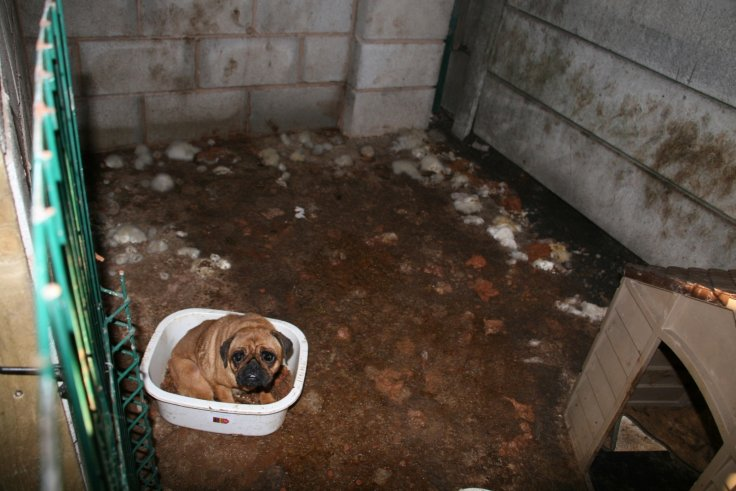 Phoebe in the puppy farm