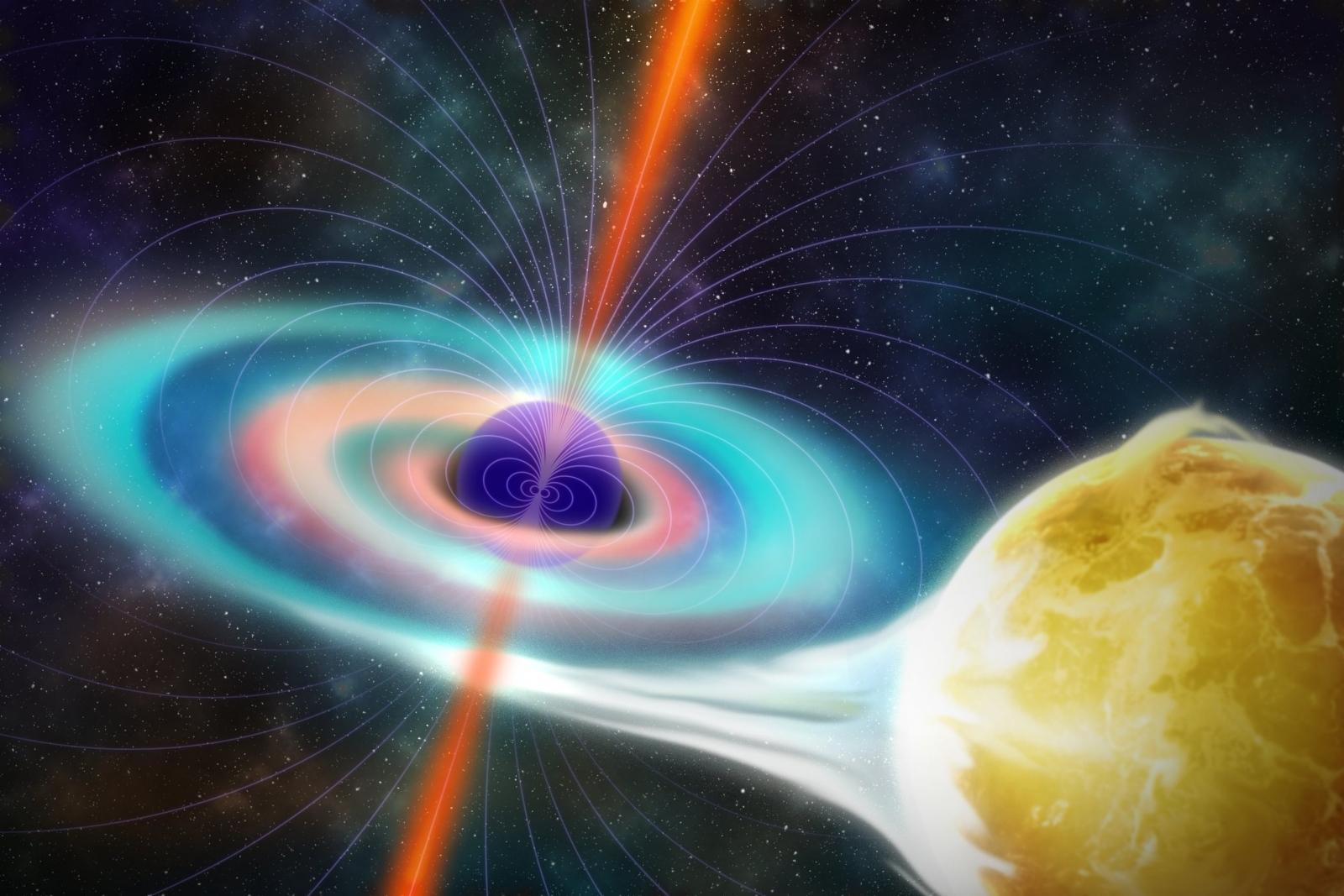 Black hole magnetism