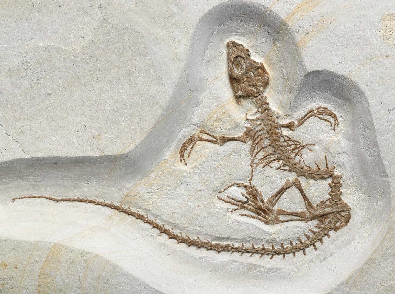 Underwater lizard fossil