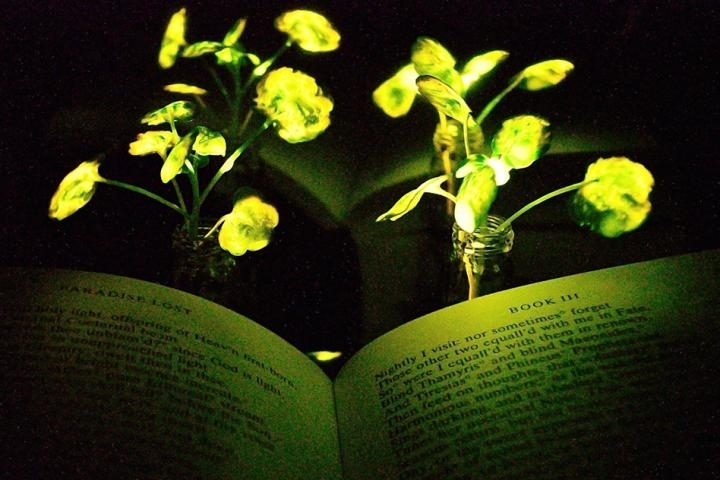 New glowing plants could be next-gen green lamps for your workplace