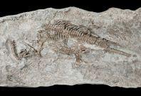 Rhaeticosaurus plesiosaur