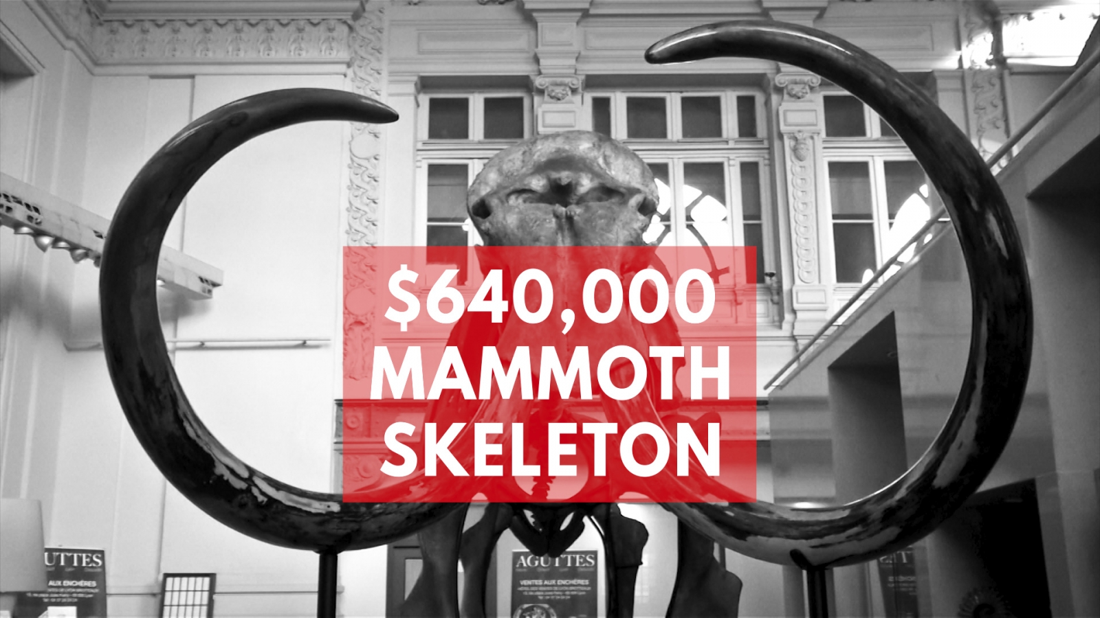 Ancient woolly mammoth skeleton sells for record price in France