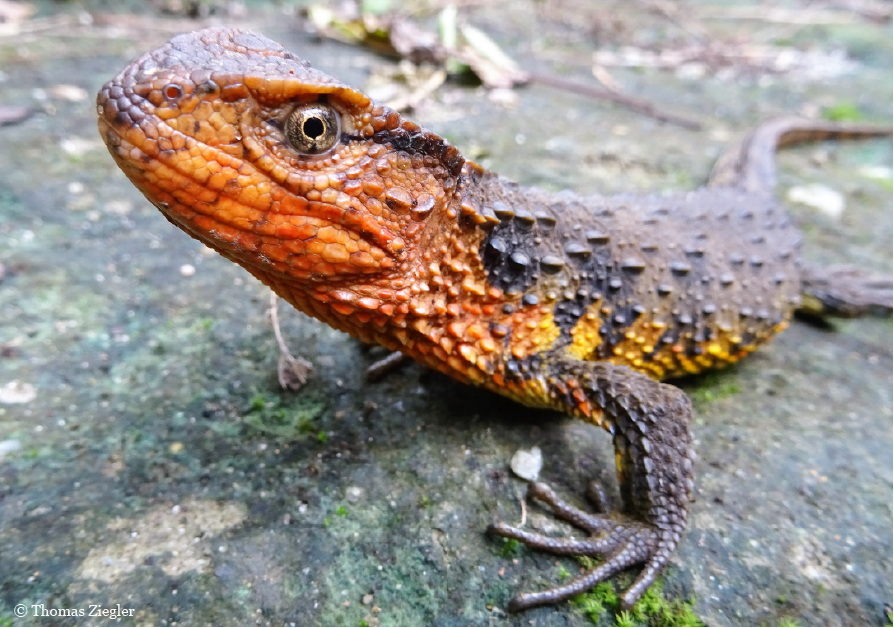 Over 100 new species discovered in Southeast Asia's Greater Mekong region