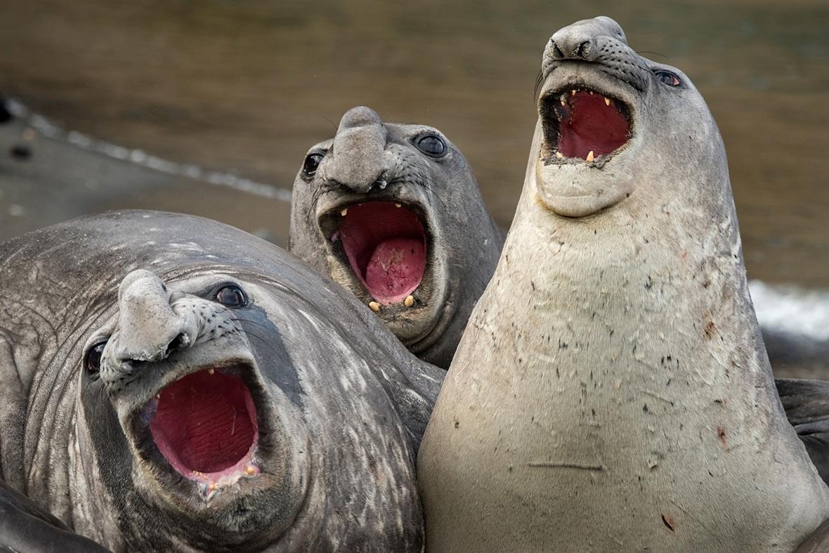 Comedy Wildlife Awards