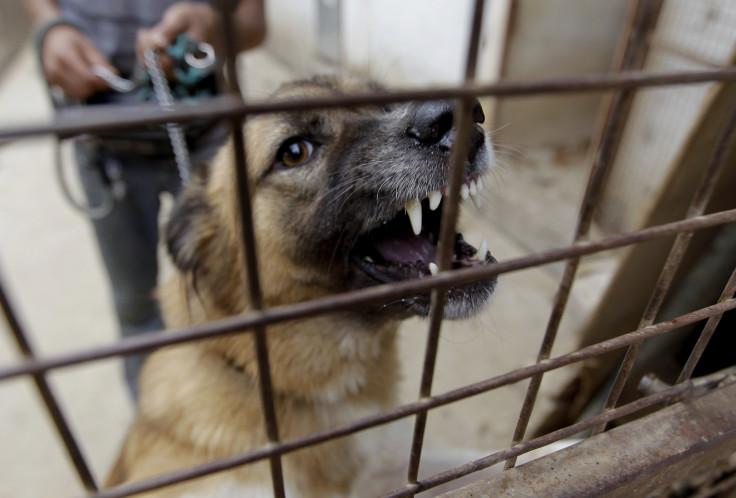 angry dog, teeth