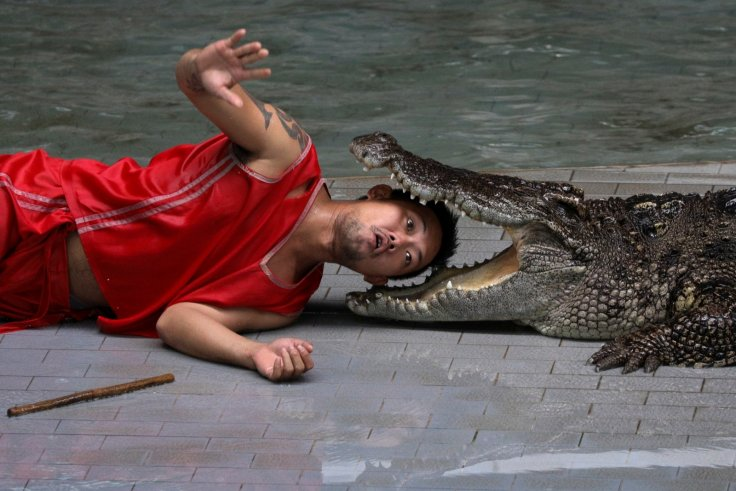 A zoo performer reacts as he puts his head between the jaws of a crocodile during a performance for tourists in Thailand