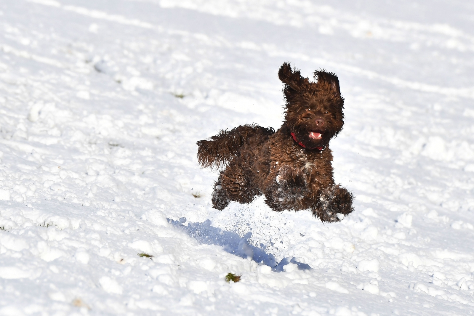 Can Dogs Catch Pneumonia From Humans