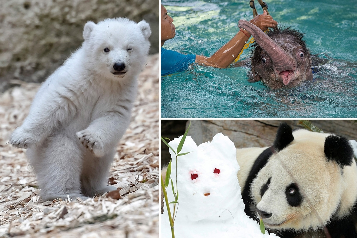 Pictures of the Year 2017 animals