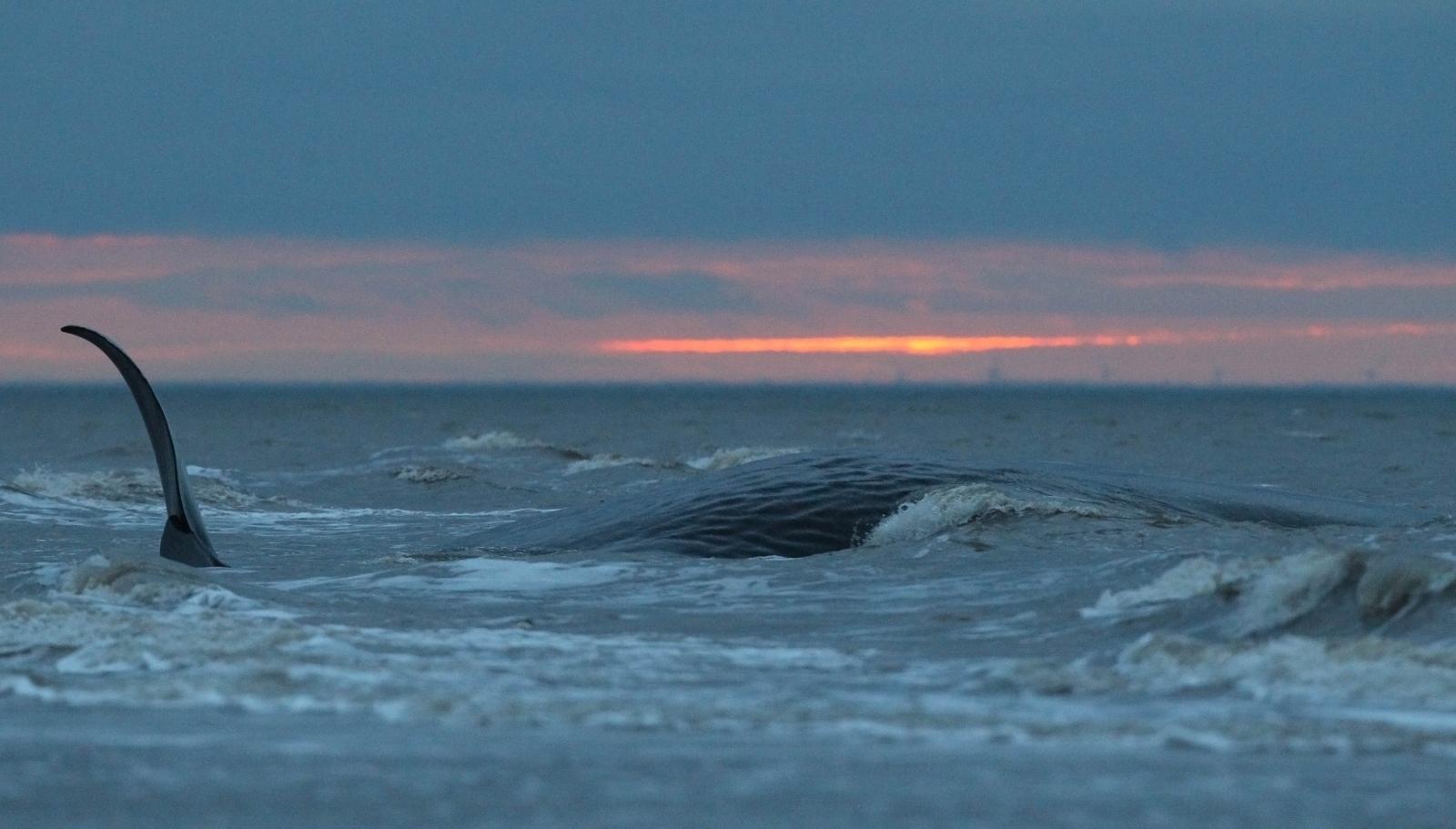 Ocean Whirlpool