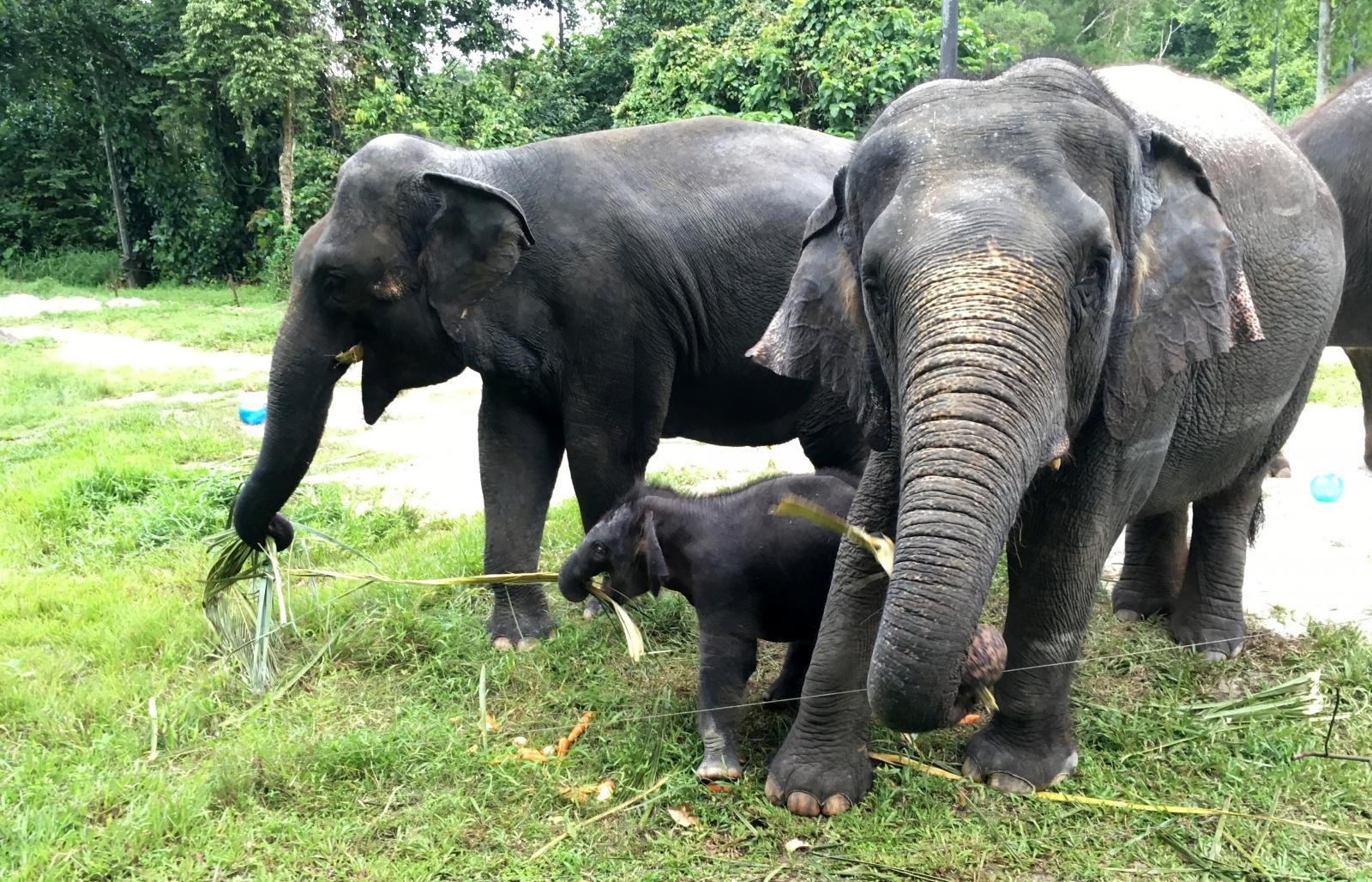 Elephants Animal Animals Calf: Camera-shy Elephant Abandons Calf After Villagers Crowd