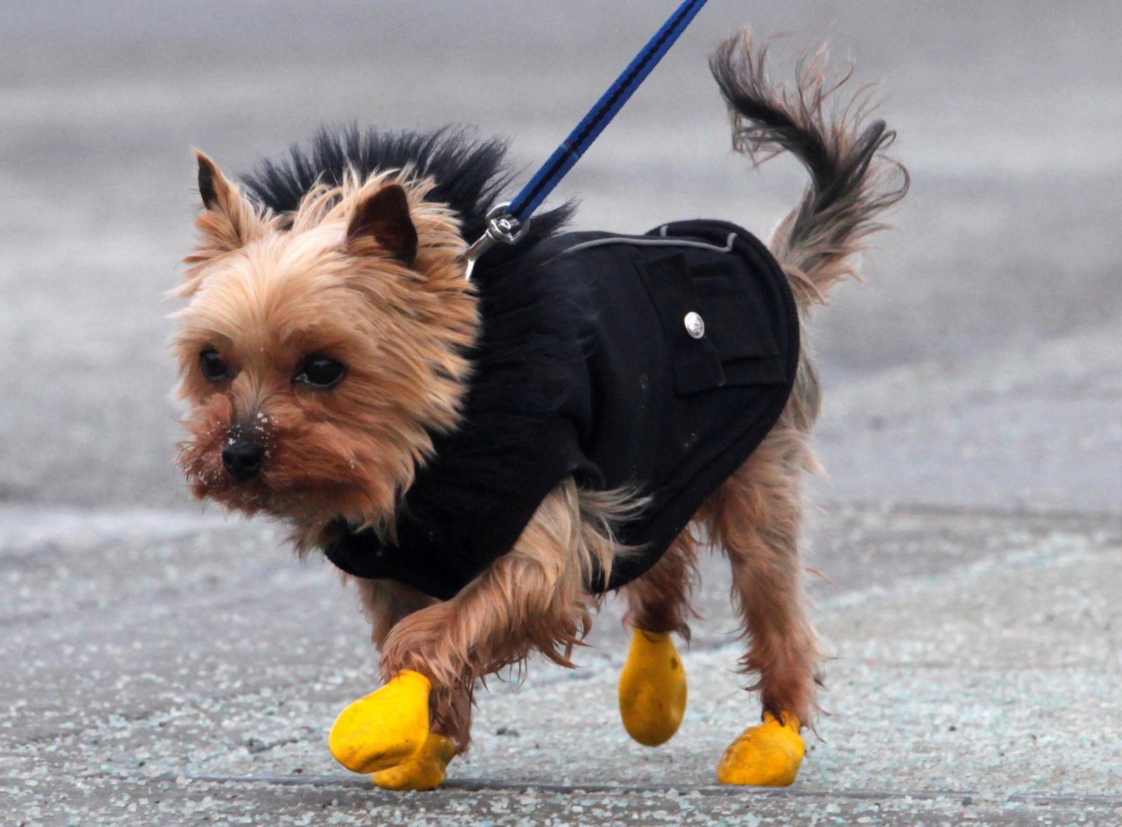 Can Dogs Catch Flu Virus
