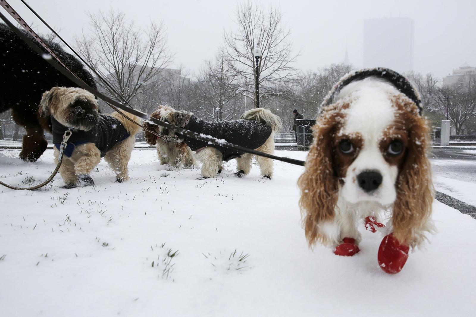 dog, cold, snow
