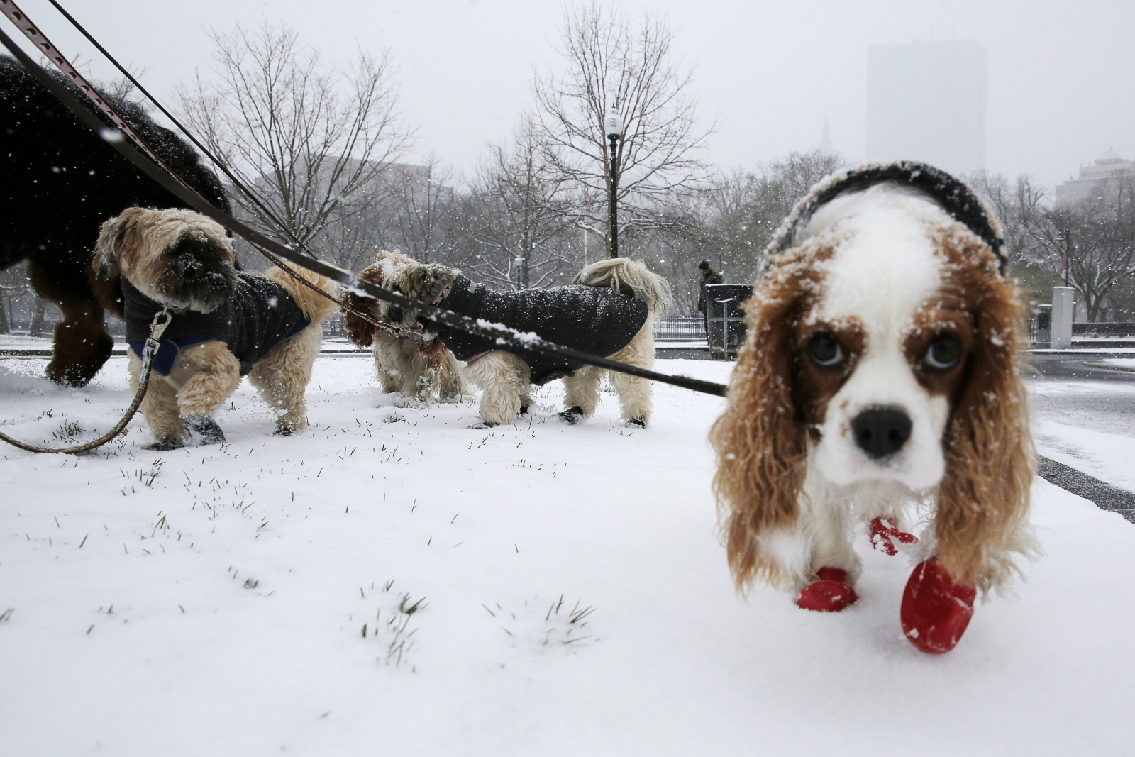 dog, cold, snow