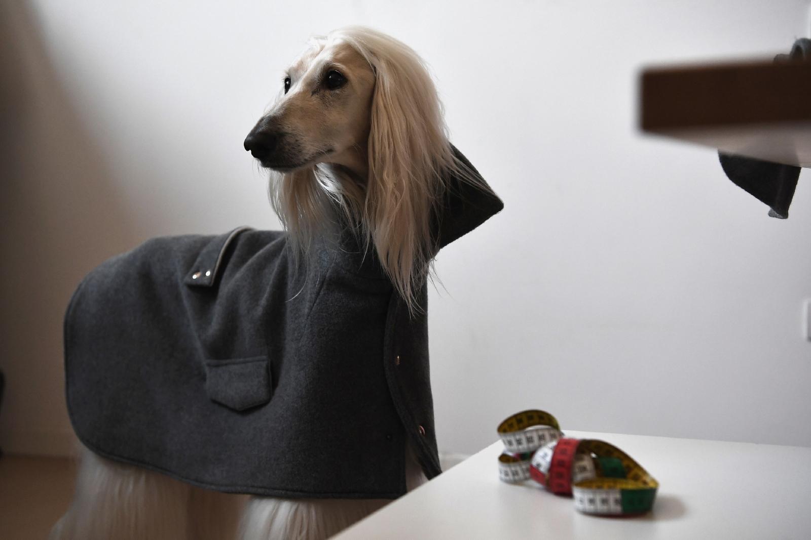 Dog a Porter