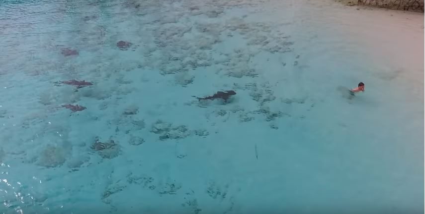 Shark attack Bahamas