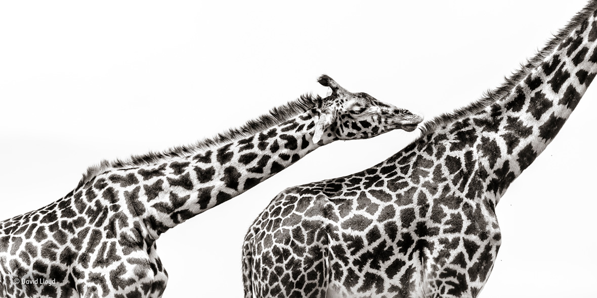 Wildlife Photographer of the Year People's Choice