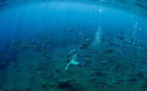 Climate change impact on marine food webs