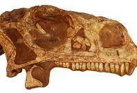 Dinosaur fossil 3D reconstruction