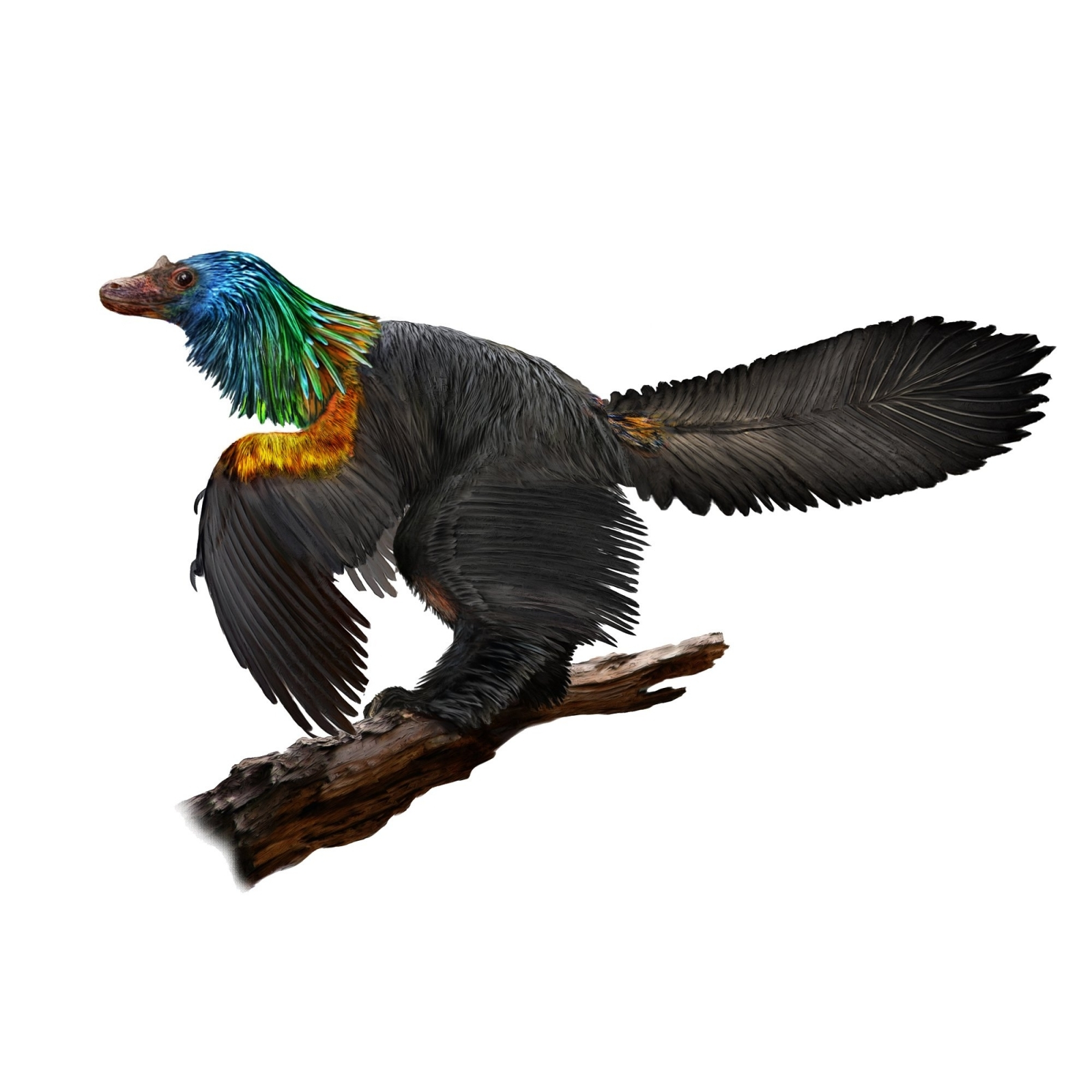 Birdlike Dinosaur Had Iridescent Feathers, Scientists Say