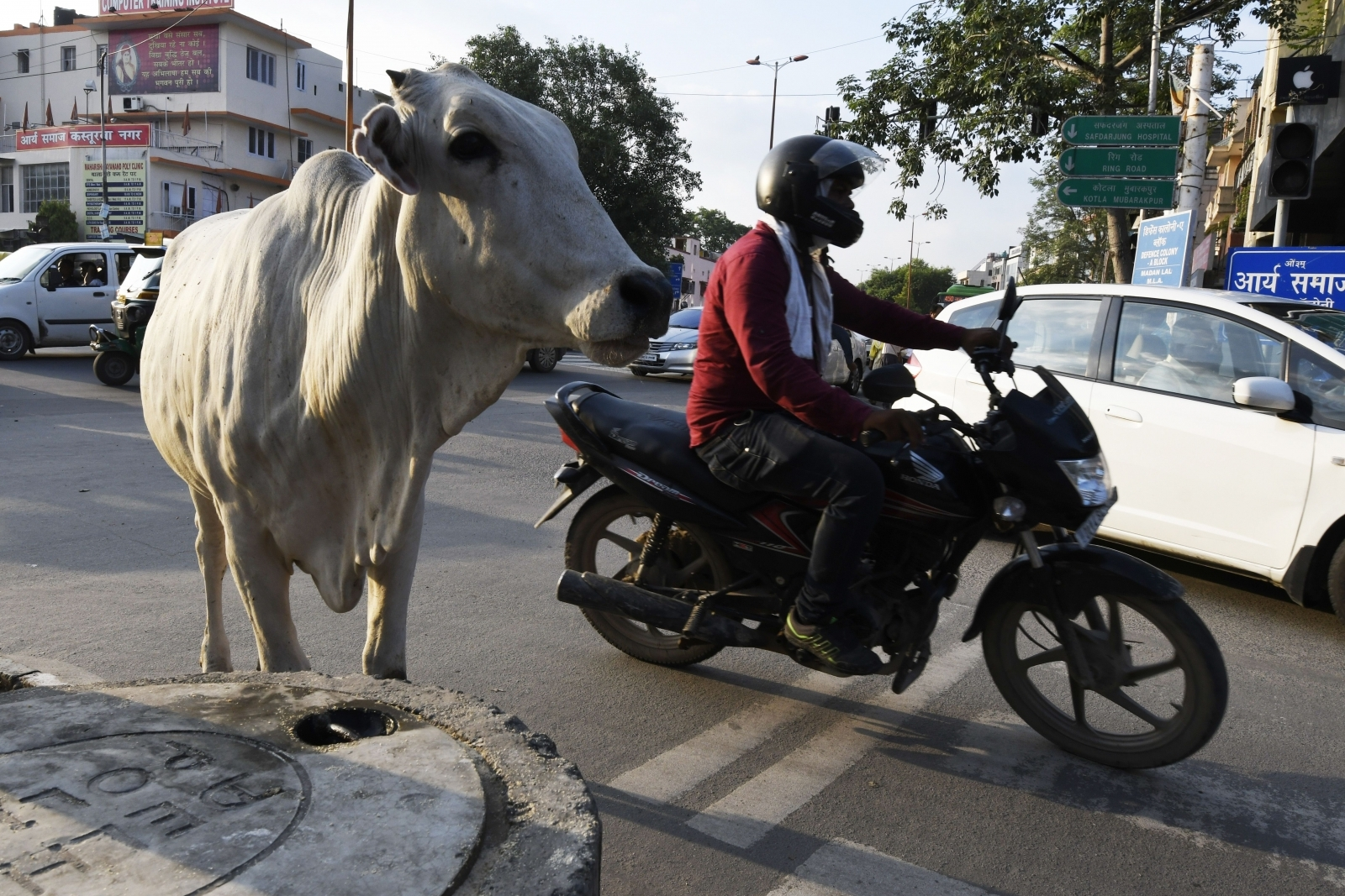 Cows are free to wonder through towns and villages, and steps to protect them from harm have stepped up under the ruling Hindu nationalist Bharatiya Janata Party (BJP)