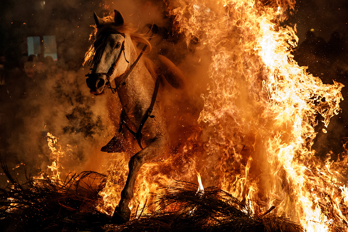 Horses are ridden through fire to honour patron saint of animals