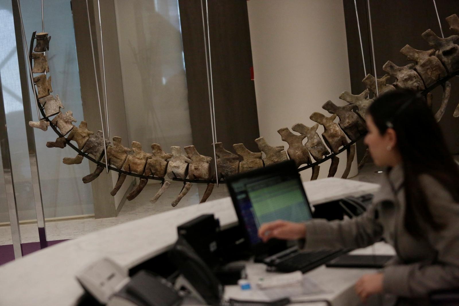 Sauropod tail