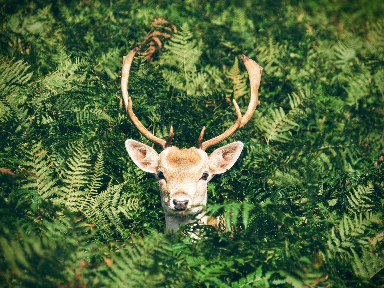 What is zombie deer?: The wasting disease experts fear could spread to humans