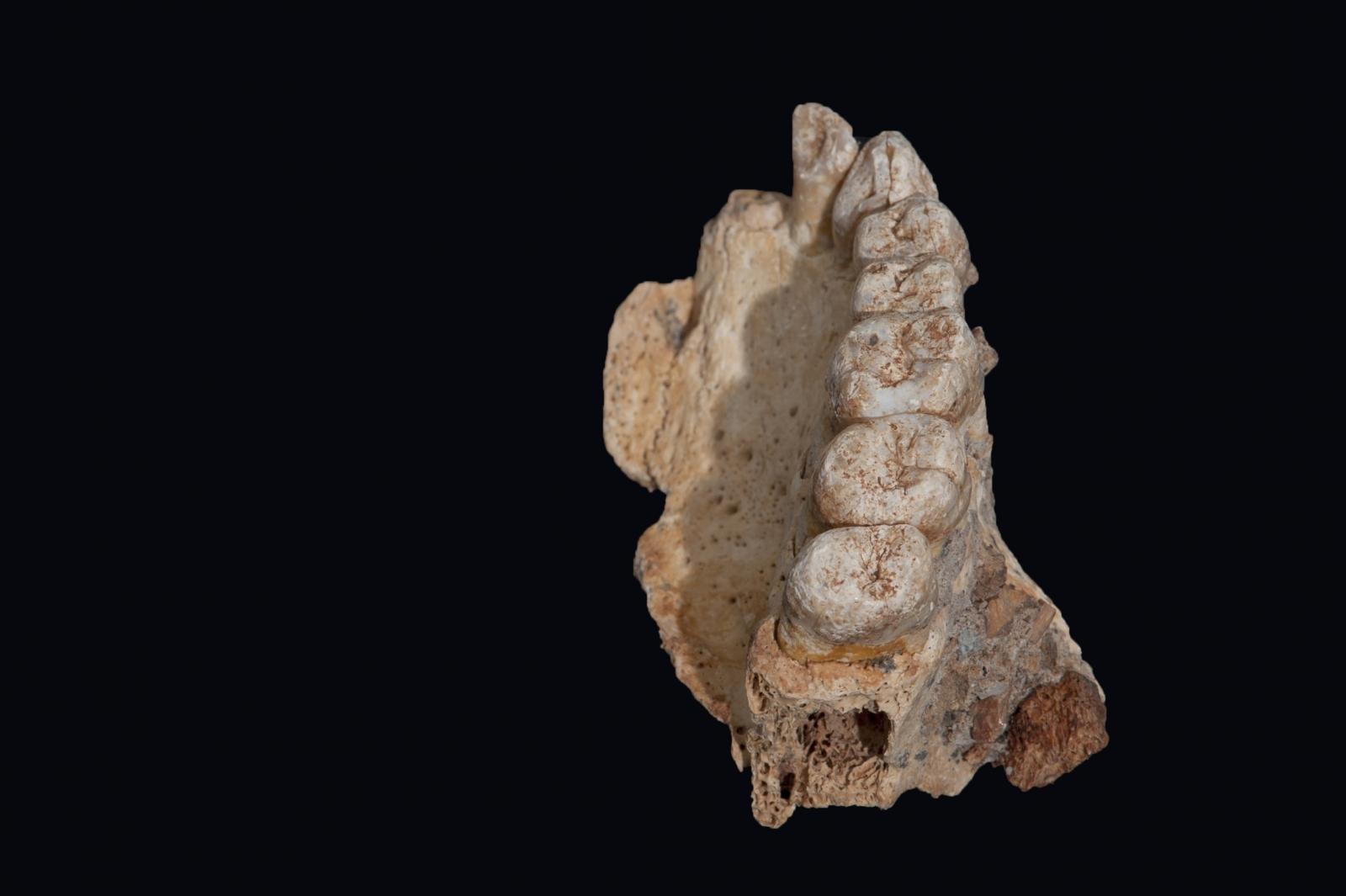 Misliya fossils