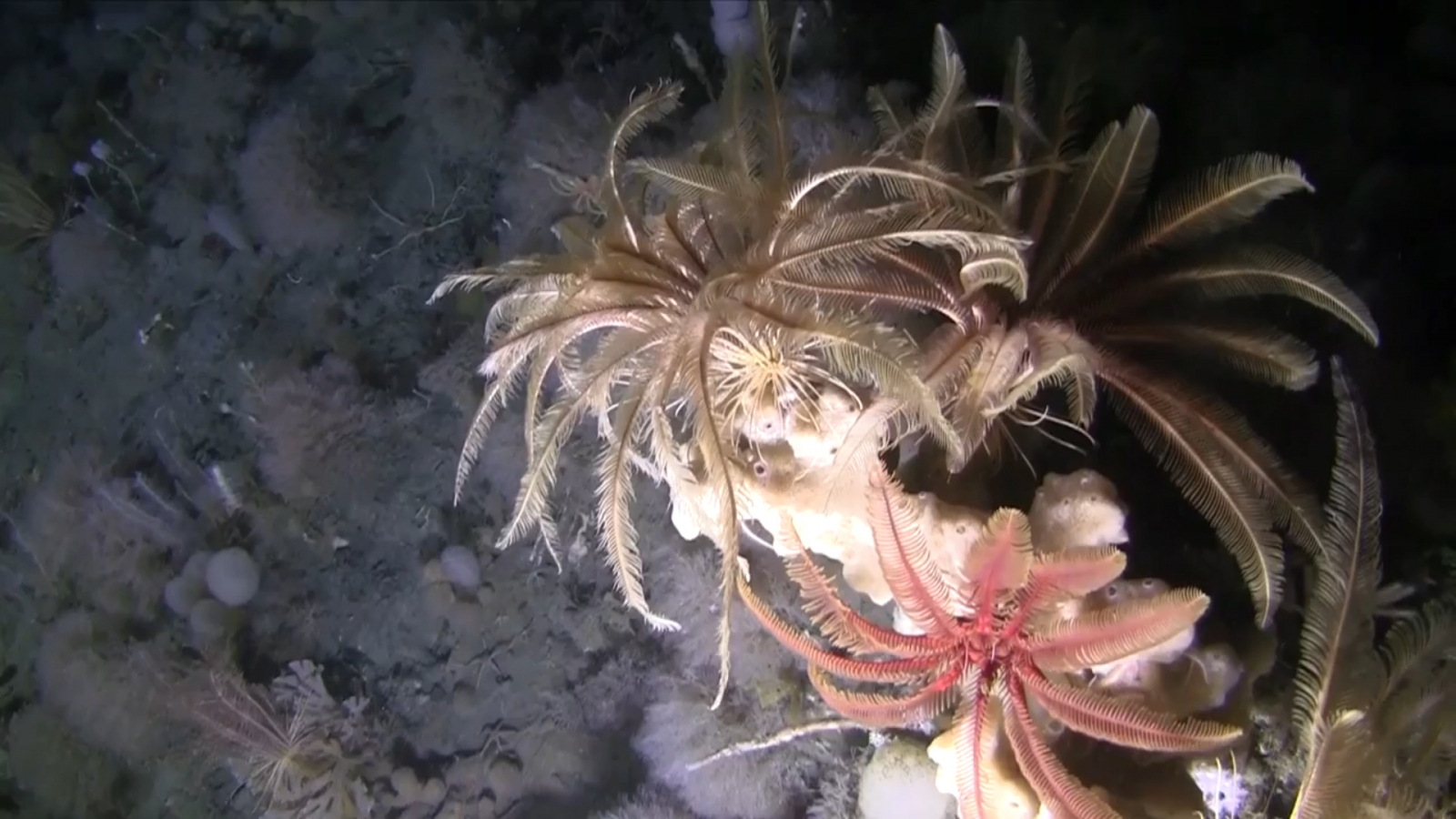 watch-first-ever-footage-of-the-antarctic-seafloor