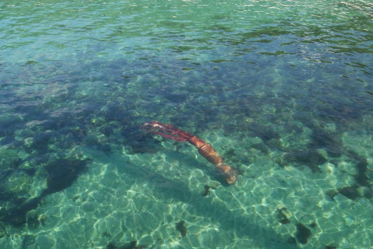 giant squid murdered by fellow squid on spanish coast