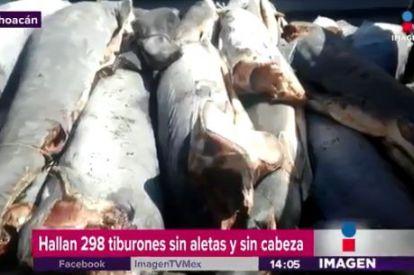 300 dead sharks