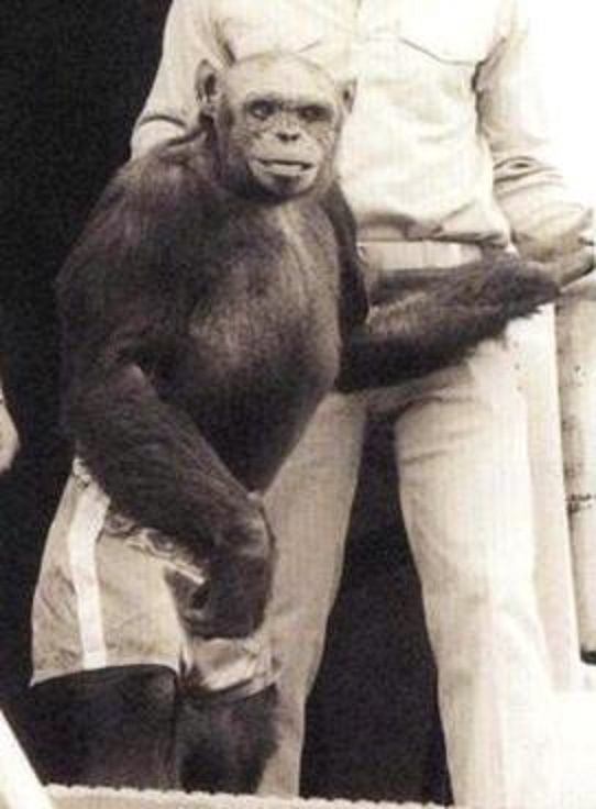 Humanzee: A human-chimp hybrid was born in a US lab 100 years ago, claims renowned scientist