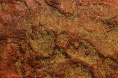 100-million-year old dinosaur tracks