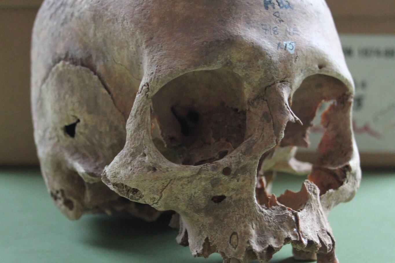 Repton Great Viking Army human skull