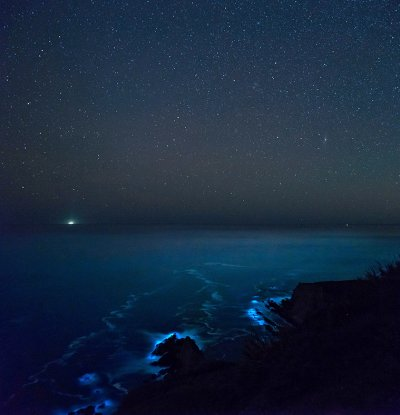 bioluminescent phytoplankton Big Sur California