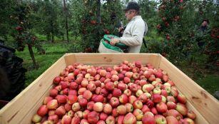 Apple gathering in Worcester, UK