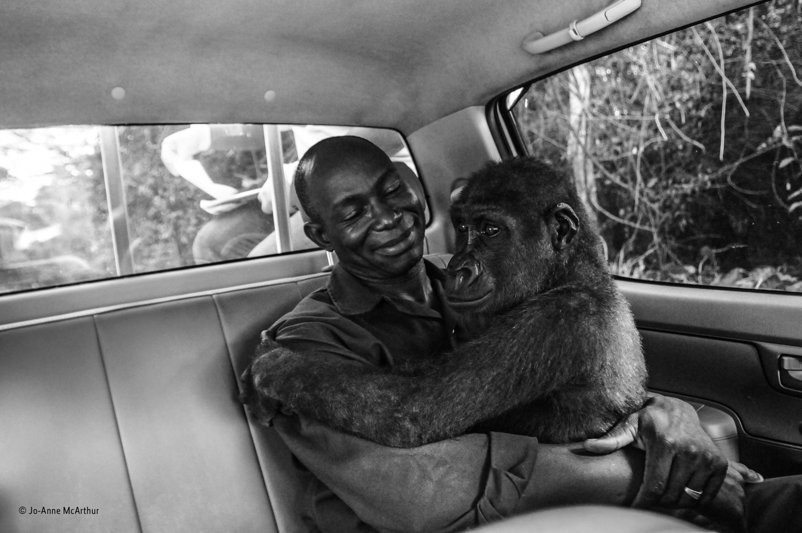 Image result for winning people's choice picture of man who rescued gorilla