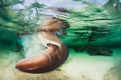 Underwater Photographer of the Year 2018