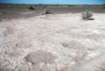 Ice Age Mammoth fossil tracks